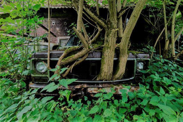 Abandoned vehicle bursting with foliage. Author: Jonk Photography