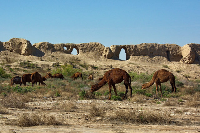 Camels and Merv ruin in the background.Author:Kalpak TravelCC BY 2.0