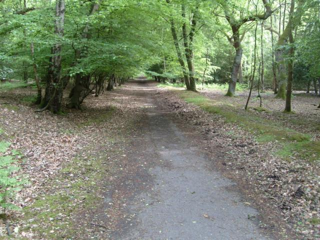 Abandoned forest road. Author: John Leeming CC BY-SA 2.0
