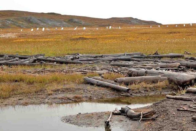 Whalers' graveyard. Author:Ansgar WalkCC BY-SA 3.0