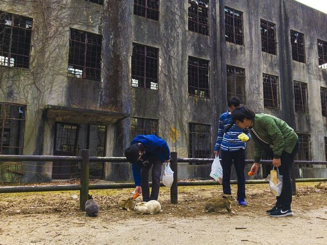 """Tourists feed carrots to a group of rabbits as they stand in front of a former power plant at Okunoshima, or """"Rabbit Island,"""" Japan."""
