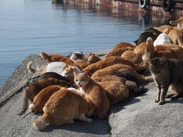 The cat population is now larger than the human population on the island. Some claim that it was them who protected the island in the events of the Tohoku earthquake and tsunami in 2011.Author:Sayoko ShimoyamaCC BY 2.0