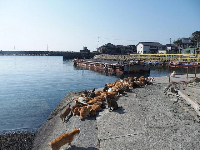 Harbor of Tashirojima.Author:Sayoko ShimoyamaCC BY 2.0