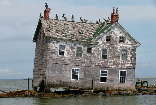 The seabirds were the only residents of the last house on Holland Island, May 2010. Author: baldeaglebluff CC BY-SA 2.0