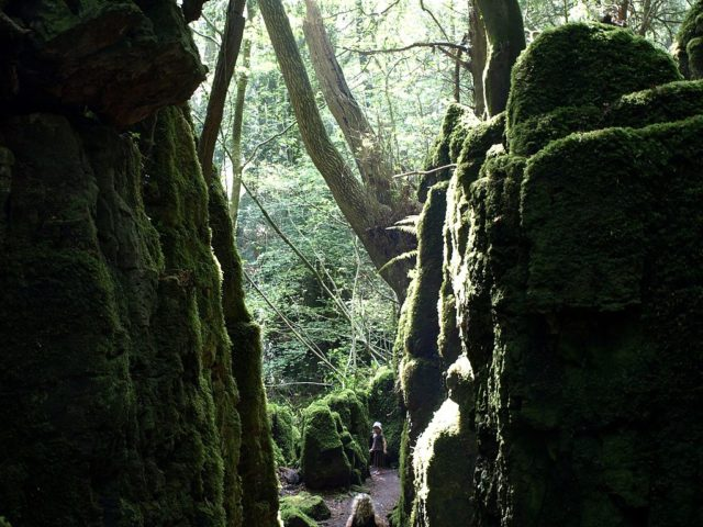 Moss-covered rocks in Puzzlewood Forest. Author:TrubbleCC BY-SA 2.0