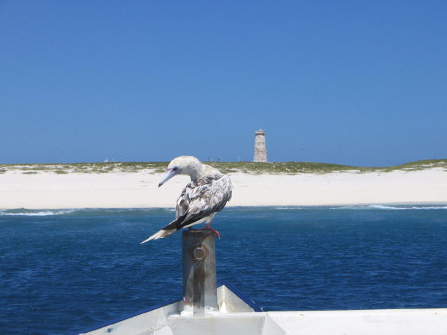 Baker Island coastline with red-footed booby. Photo Credit:Joann94024,CC BY-SA 3.0