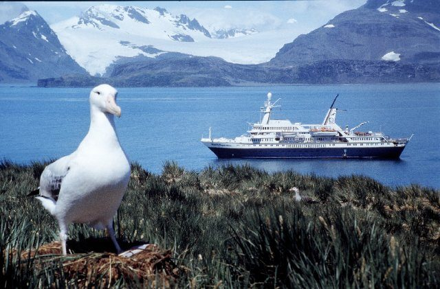 World Discoverer anchored in South Georgia. Photo Credit:Shakleton2,CC BY-SA 3.0