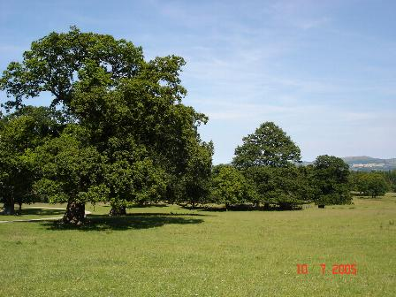 Kinmel Park (closed to the public). Author: Dot Potter CC BY-SA 2.0