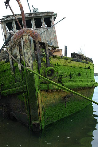 Drowned in moss/ Author: Wonderlane – CC BY 2.0