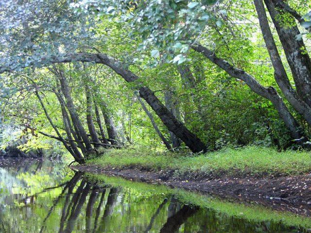 Batsto River flowing through Batsto Village. Alerante CC BY-SA 3.0