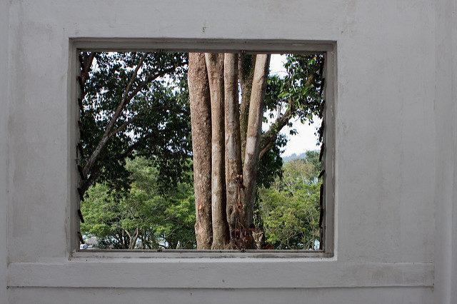 A tree outside the window.Author:Brian Jeffery BeggerlyCC BY 2.0