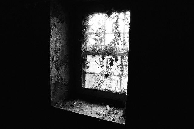 Forgotten and overgrown window. Author:Dan GroganCC BY 2.0