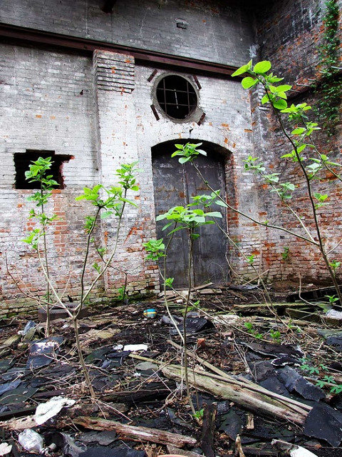 Nature reclaiming its own. Author:Joseph NovakCC BY 2.0