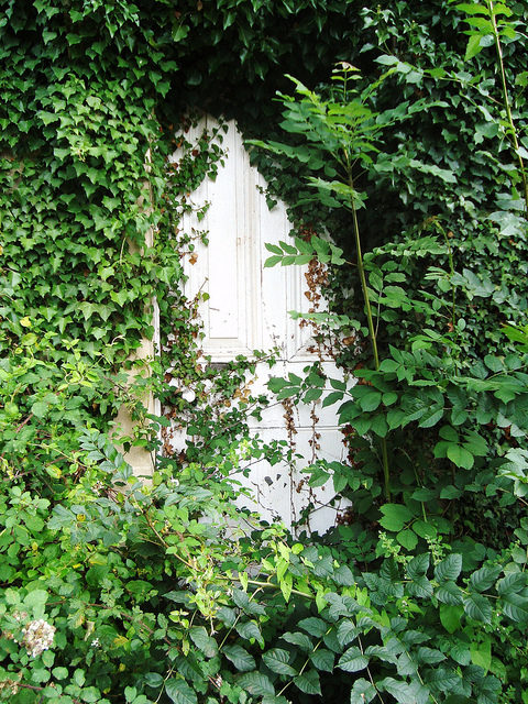 The overgrown door to the lodge.Author:bazzadaramblerCC BY 2.0