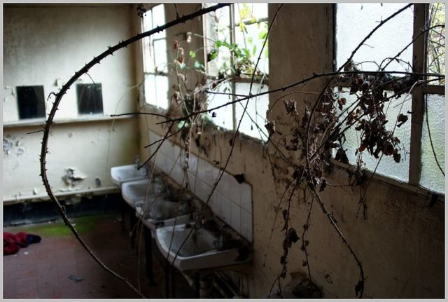 Vegetation finds its way through the window. Author:Skin – ubxCC-BY 2.0
