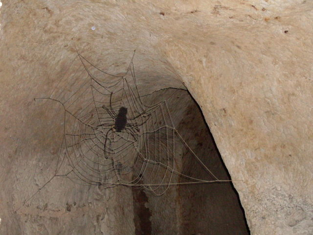An artificial web and a fake spider. Author: Fotonews CC BY-SA 3.0 pl