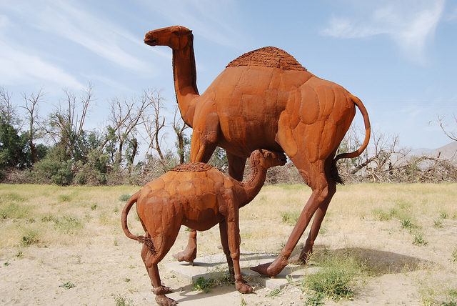 Mother and baby camel – Author: Matthew Dillon – CC BY 2.0