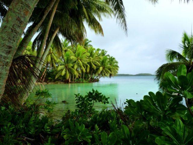 Coconut palms on Strawn Island at Palmyra Atoll