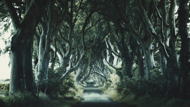 """The Dark Hedges is an avenue of beech trees along Bregagh Road between Armoy and Stranocum in County Antrim, Northern Ireland, as well as the King's Road in """"Game of Thrones."""" Lindy Buckley CC BY-NC 2.0"""