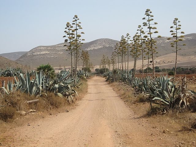 The main road leading to Cortijo del Fraile. Author: Hanarko CC BY-SA 4.0