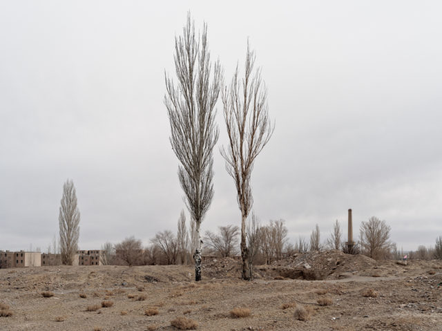 A picture of two trees that Li Yang planted when he was four. Author: Li Yang – liyangphoto.com