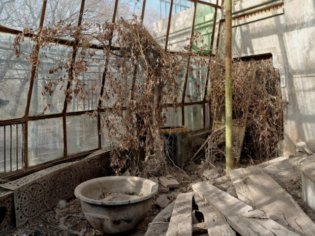 One of the greenhouses used to grow plants that could otherwise not be cultivated in the desert. Author: Li Yang – liyangphoto.com