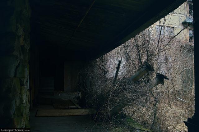 A fallen tree lying outside a building