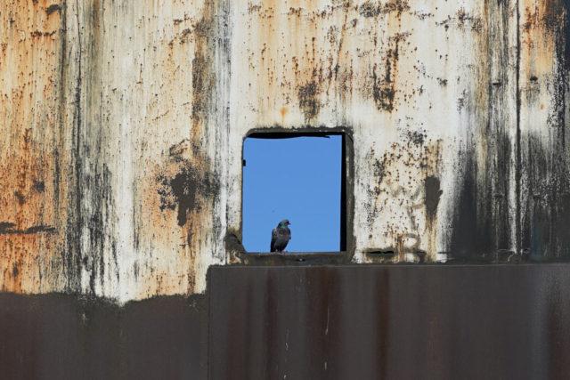 Bird sitting in an open window