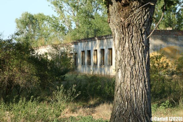 Concrete building with a tree in front